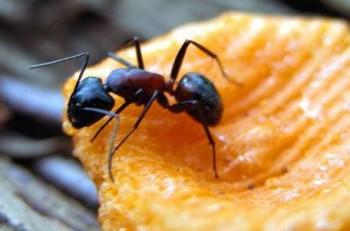 мурав (350x231, 22Kb)