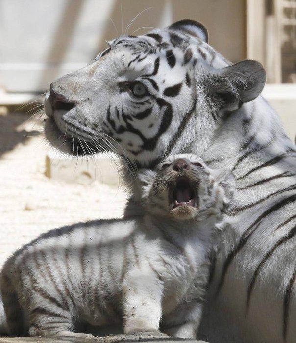 прикольные фото животных 12 (604x700, 81Kb)