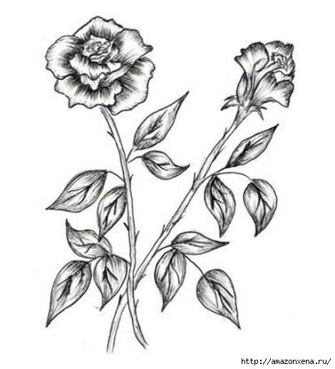 Как нарисовать розу (1) (470x518, 95Kb)