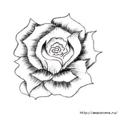 Как нарисовать розу (8) (401x390, 62Kb)