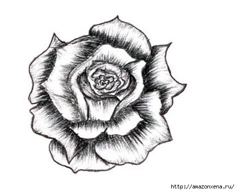 Как нарисовать розу (9) (473x383, 76Kb)
