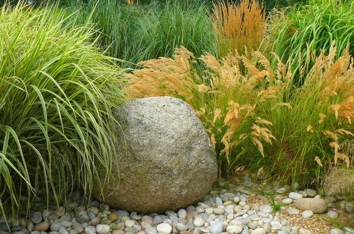 Но зато в больших садах такое возможно: мы предлагаем схему осеннего миксбордера с декоративнми злаками и.