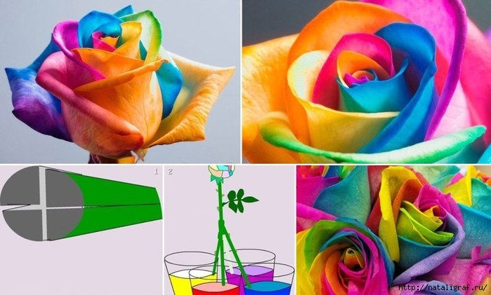 Как сделать розу чёрной 822
