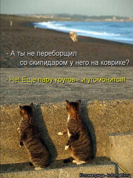 kotomatritsa_1P (524x700, 84Kb)