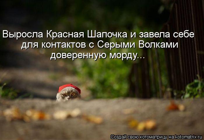 kotomatritsa_8I (700x479, 43Kb)