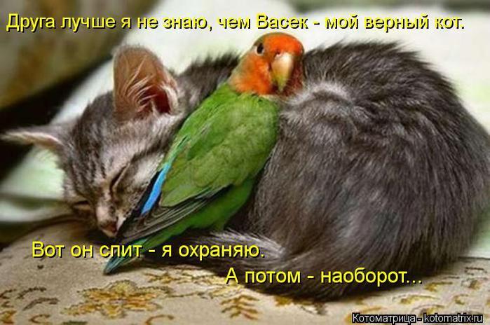 kotomatritsa_IM (700x464, 60Kb)