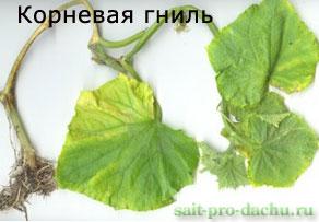 bolesni-ogurcov2-4 (292x203, 17Kb)