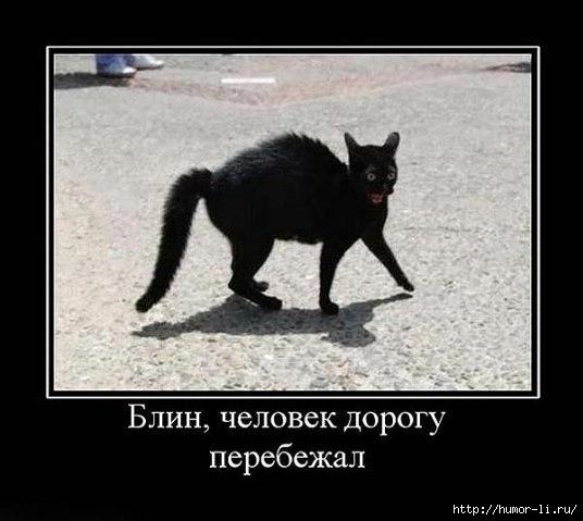 какие черная кошка обошла вокруг примета времени суток всем!