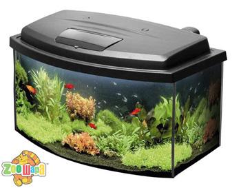 аквариум_3 (350x273, 58Kb)