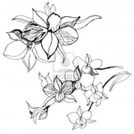 Превью 13247595-set-of-floral-design-elements--orchid-flowers (700x700, 209Kb)