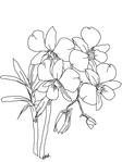 Превью phaleonopsisorchids (525x700, 129Kb)