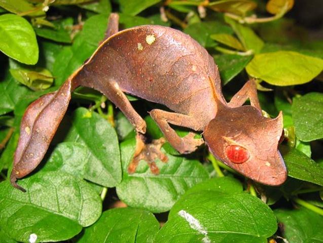 Самые необычные существа планеты Земля - 30 Апреля 2012 - Дневник - История успеха