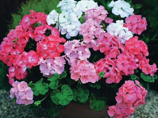 kartinki24_flowers_0040 (550x412, 216Kb)