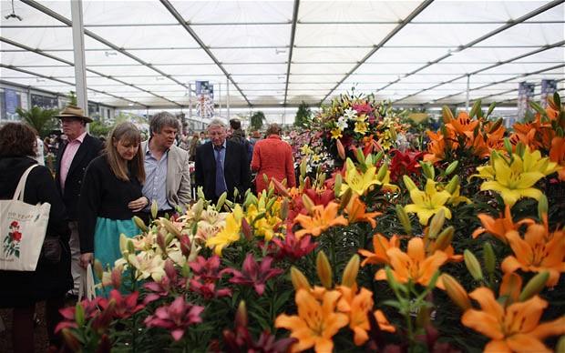 Chelsea Flower Show 2013 3 (620x388, 79Kb)