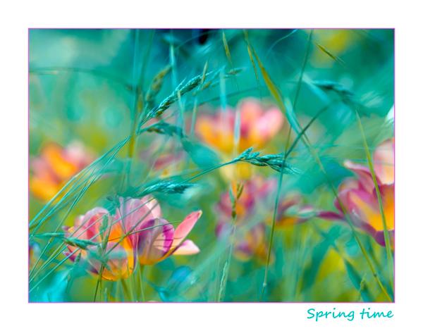 3303834_rainbow_spring_16 (600x470, 138Kb)
