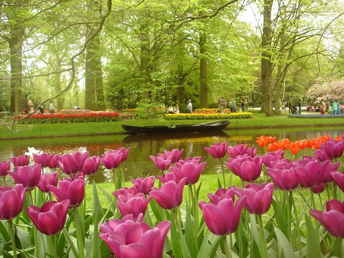 цветущие цветы 1 (700x525, 155Kb)