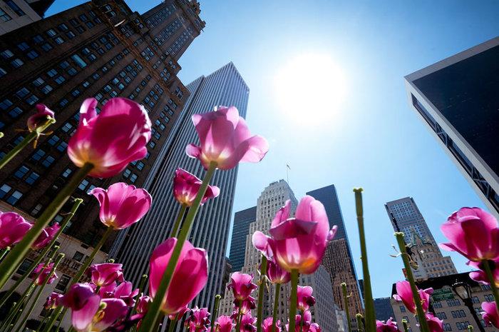 цветущие цветы 6 (700x465, 105Kb)