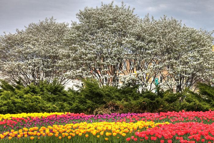 цветущие цветы 15 (700x466, 175Kb)