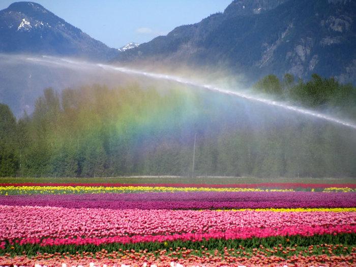 цветущие цветы 17 (700x525, 104Kb)