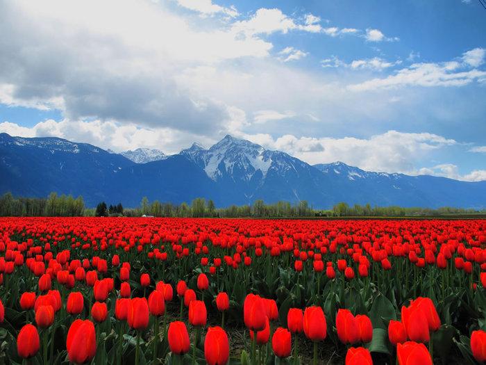 цветущие цветы 20 (700x525, 100Kb)
