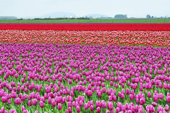 цветущие цветы 22 (700x464, 197Kb)