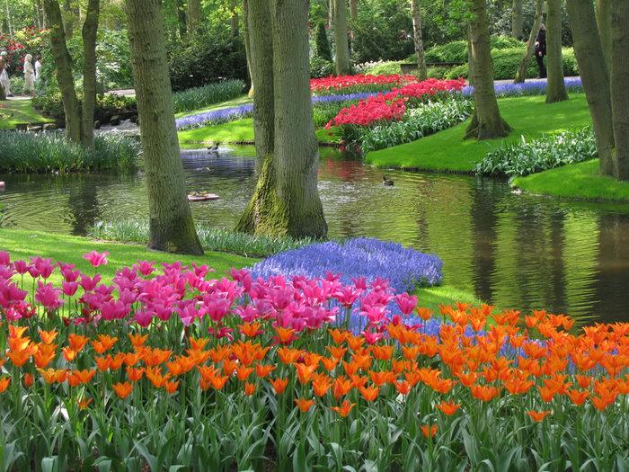 цветущие цветы 25 (700x525, 163Kb)