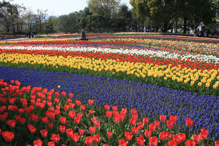 цветущие цветы 27 (700x466, 176Kb)