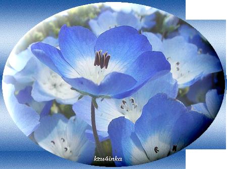 Голубые-цветы (450x336, 234Kb)