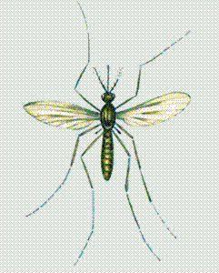krovososushhie-komaryi (241x300, 29Kb)
