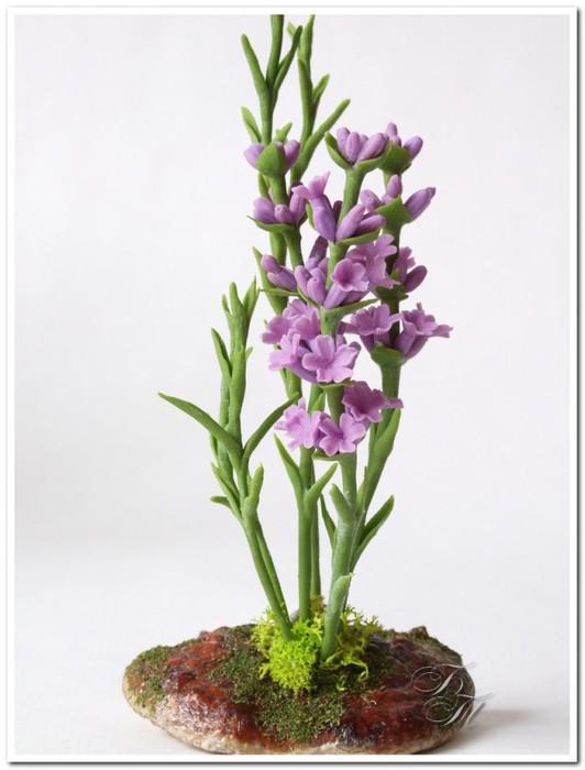 lavender_010-640x842 (532x700, 62Kb)
