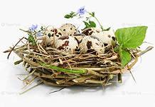 перепелин яйца (218x150, 9Kb)