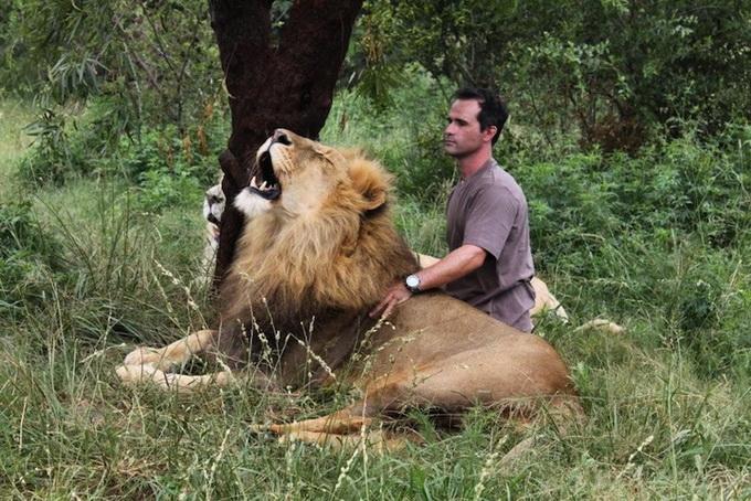 Kevin Richardson львы фото 1 (680x454, 176Kb)