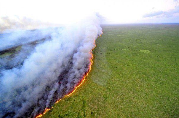 Лесной пожар на юге Бразилии (604x401, 40Kb)