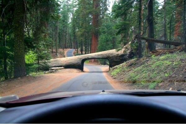 Необычный тоннель, Штат Калифорния, США (599x399, 38Kb)