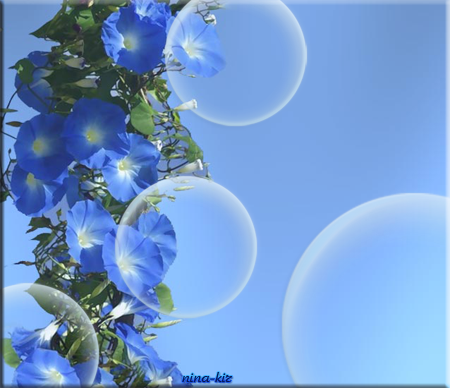 Голубые-вьюны (450x388, 213Kb)