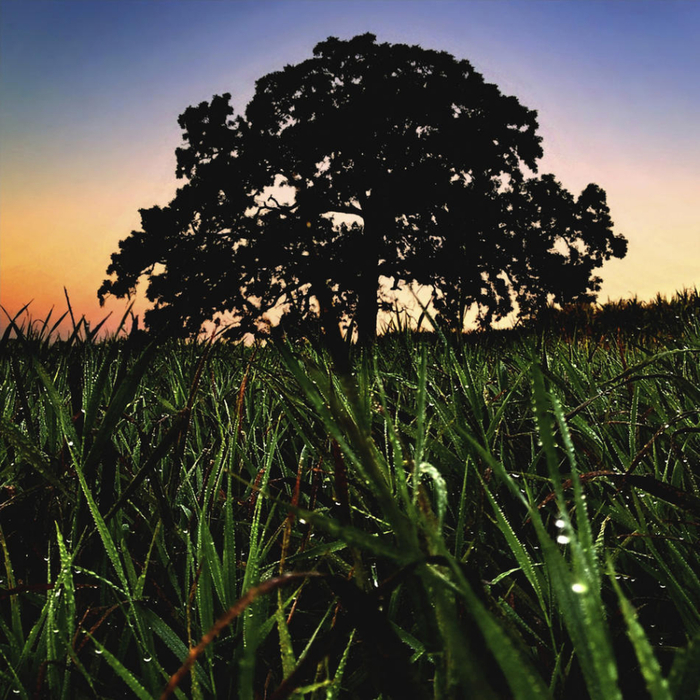 oak13 (700x700, 573Kb)