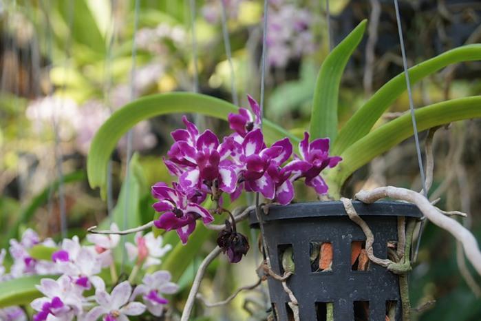 цветы тая14 (700x466, 82Kb)