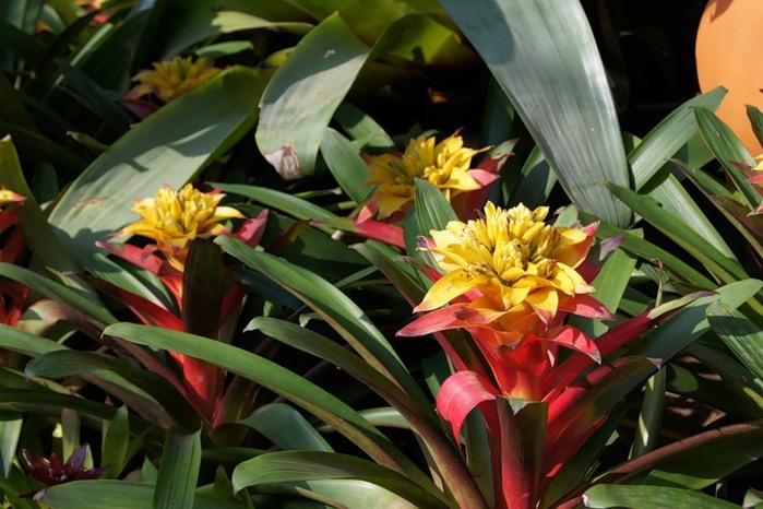 цветы тая19 (700x466, 97Kb)