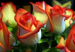 flowers-55295467 (260x180, 16Kb)