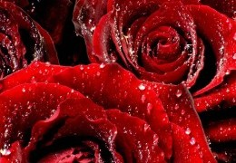 flowers-1402515098 (260x180, 23Kb)