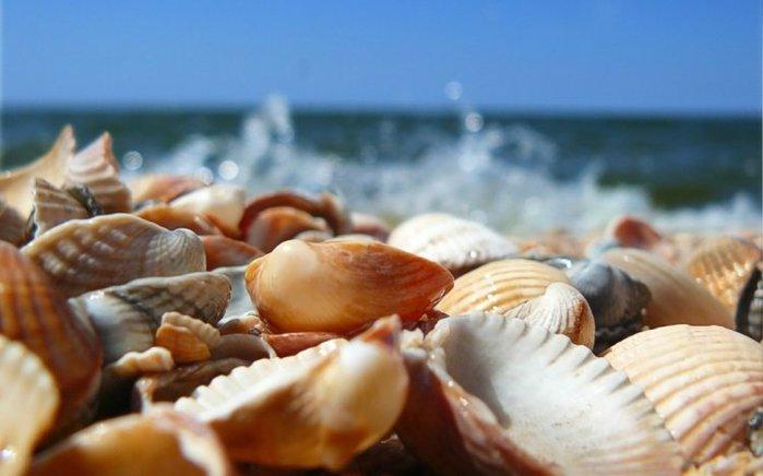 shells_36 (700x436, 44Kb)