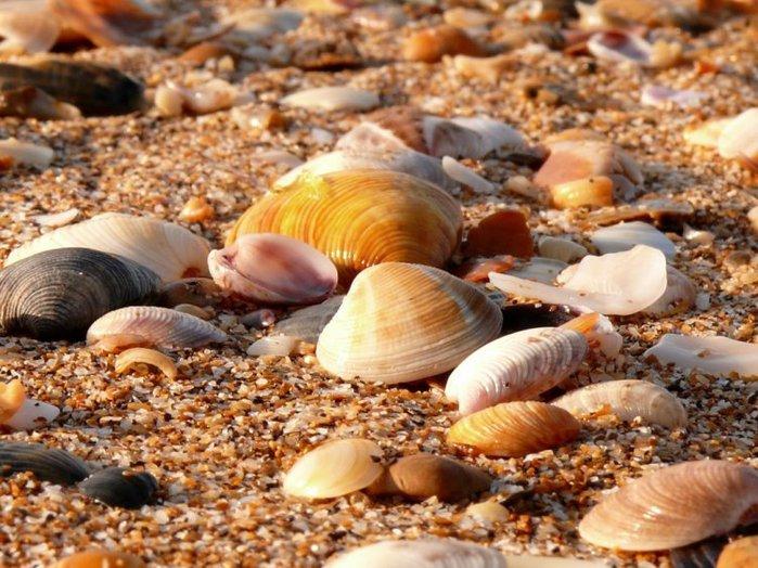 shells_37 (700x524, 100Kb)
