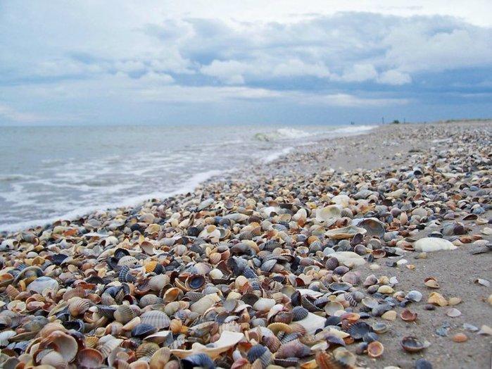 shells_41 (700x524, 94Kb)