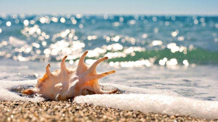 shells_43 (700x392, 54Kb)