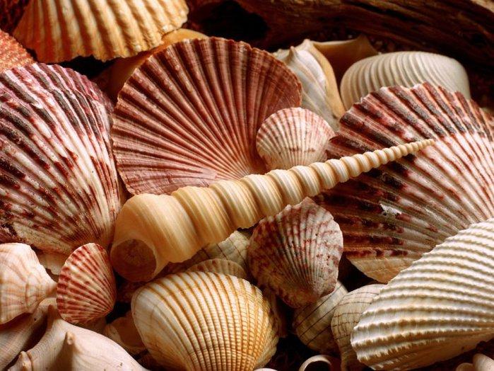 shells_47 (700x524, 101Kb)
