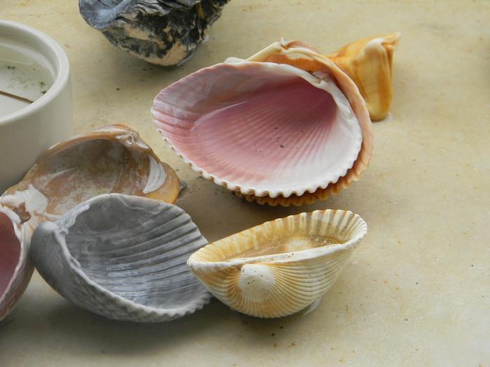 shells_11 (700x525, 207Kb)