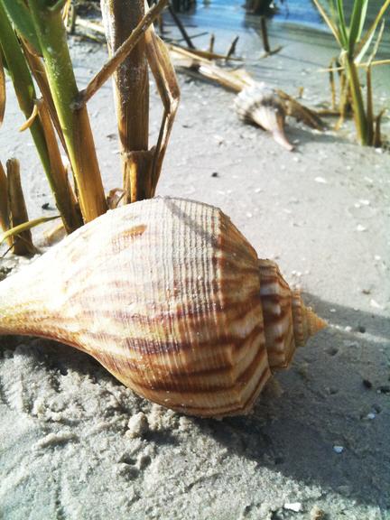 shells_13 (432x576, 232Kb)