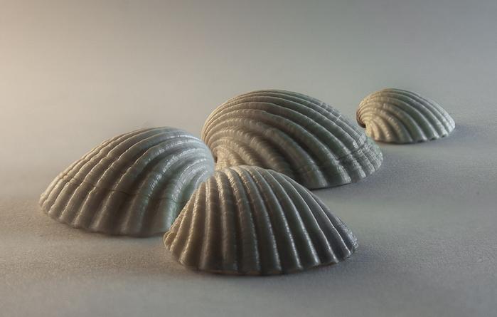 shells_17 (700x445, 161Kb)