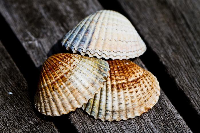 shells_19 (700x466, 294Kb)