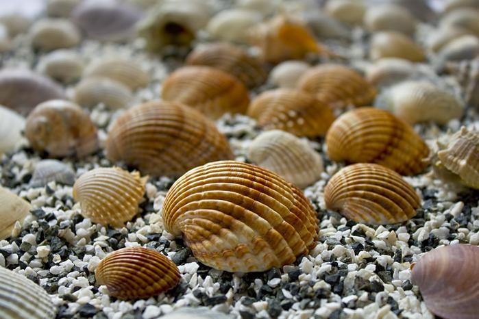 shells_2 (700x466, 235Kb)